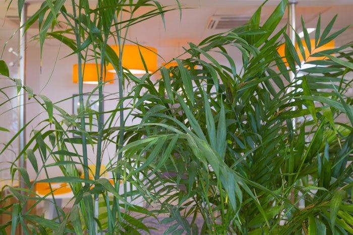 עיצוב פנים ביופילי המשלב צמחיה פנימית וגופי תאורה כתומים