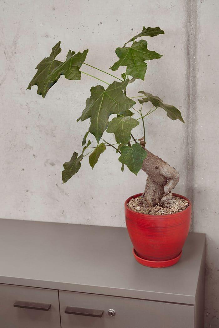 צמחיה במשרדים